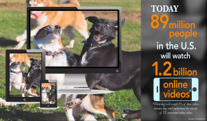 Video Facts From Silly Dogs